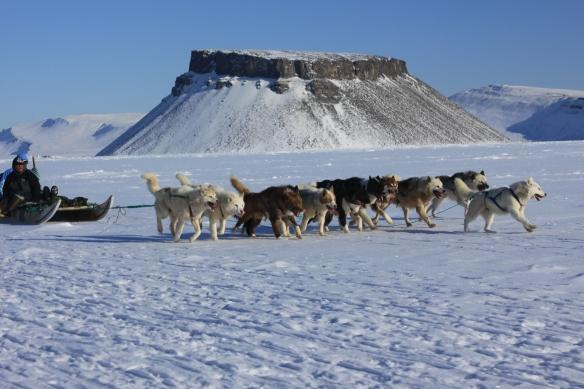 Dogsled in snowy Greenland